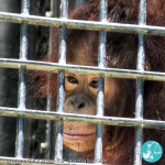 Separate and Unequal: Why Nonhuman Legal Personhood is Needed