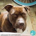 Companion Animals and Domestic Abuse