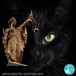 The Importance of Professionalising Animal Law