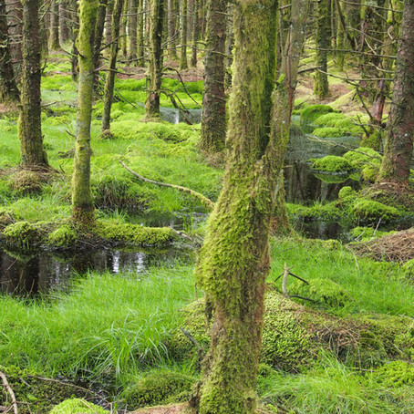 Forest policy in Scotland: will new regulations help a peat paradigm shift?