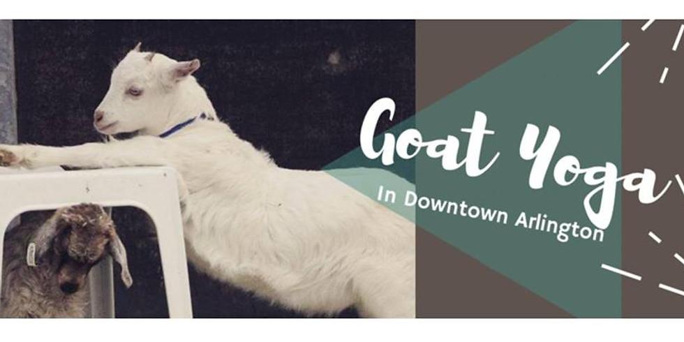Goat Yoga in Downtown Arlington