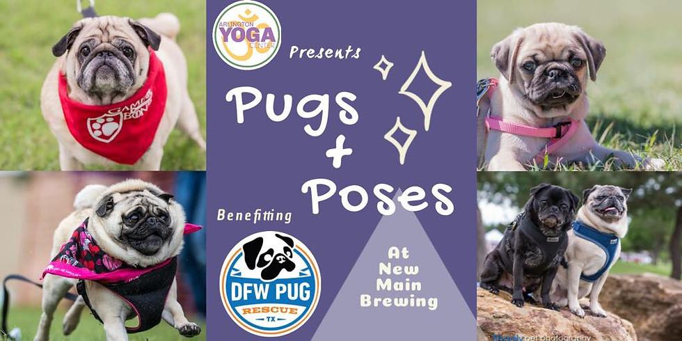 Pugs + Poses