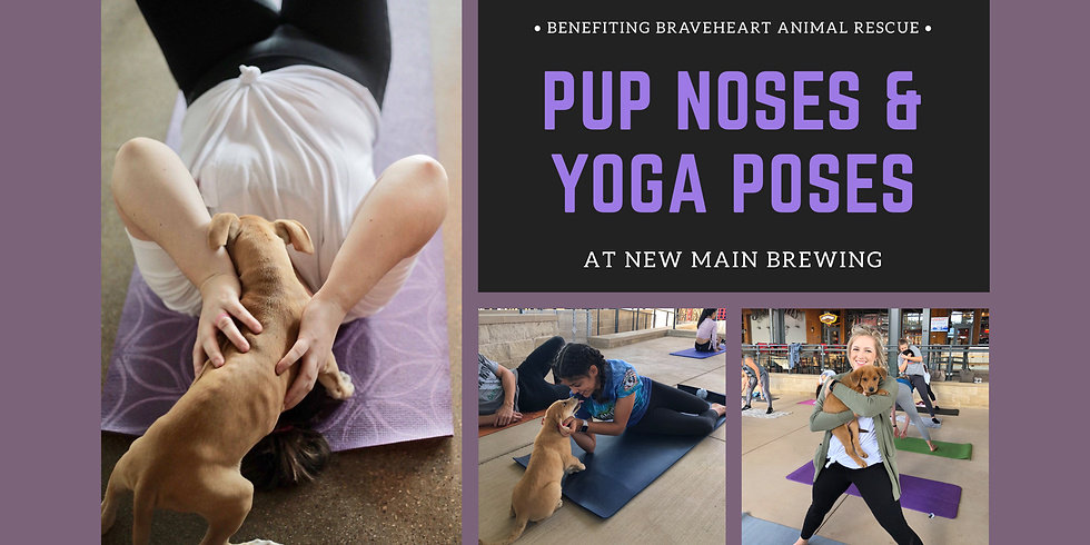 Pup Noses + Yoga Poses
