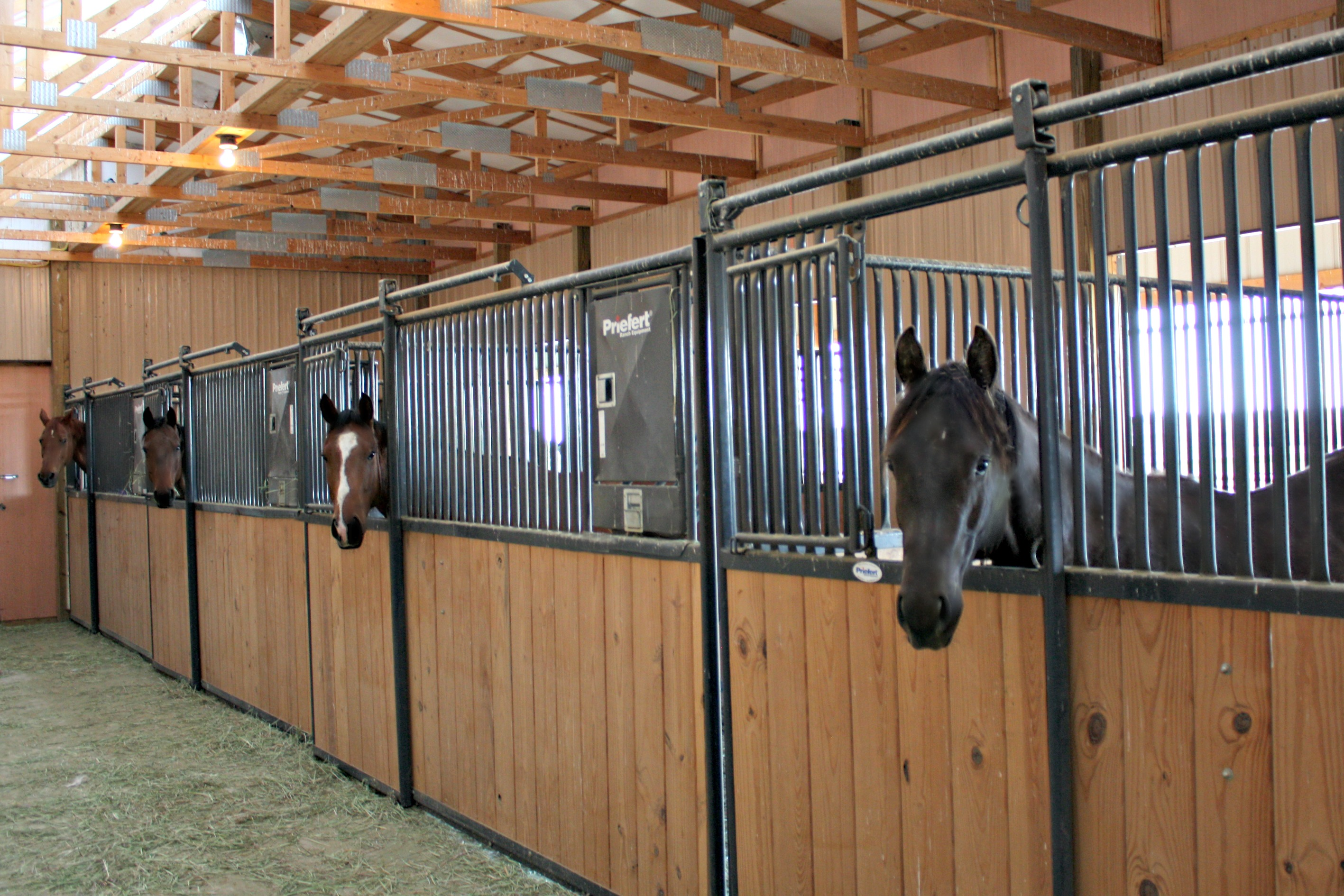 Indoor horse stable