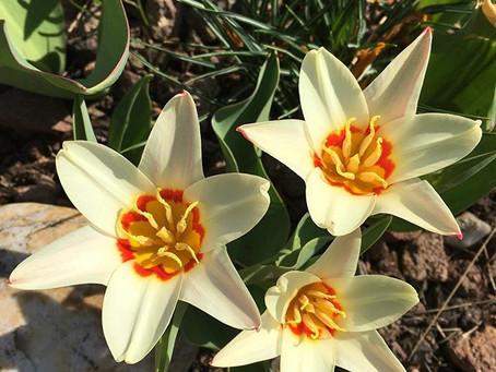 Ayurvedischer Frühlingsbeginn -Kaphazeit |  ayurvedische Lebens -& Ernährungsempfehlungen