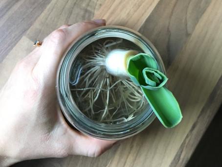 Regrowing - 2. Chance für deine Gemüsereste