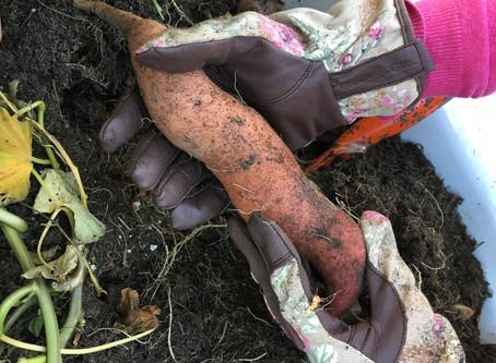 Süßkartoffelbrownie |  Sonnenblumen im Herbst und die Fähigkeit neugierig zu sein
