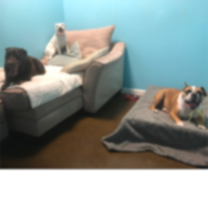 haute_dog_pet_resort_dog_boarding_v2.png