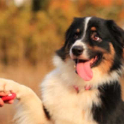 haute_dog_training_414.png