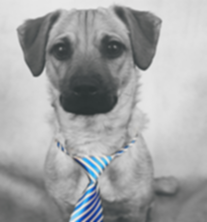 haute_dog_studio_homepage2.png
