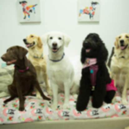haute_dog_pet_resort_doggy_daycare2.png