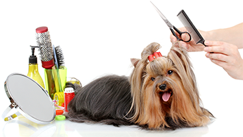 Full Service Dog Grooming
