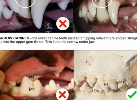 Yaygın diş sorunları