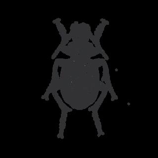 Käfer_ 2.png