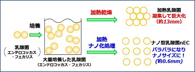 ナノ型 乳酸菌