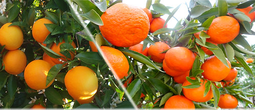 15 kg Naranjas y Mandarinas Ecológicas.