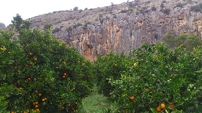 Naranjas ecológicas a domicilio envio gratis