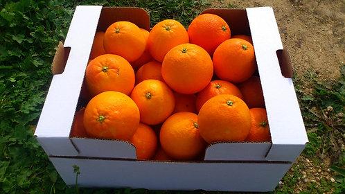 20 kg Naranjas Ecológicas Zumo.