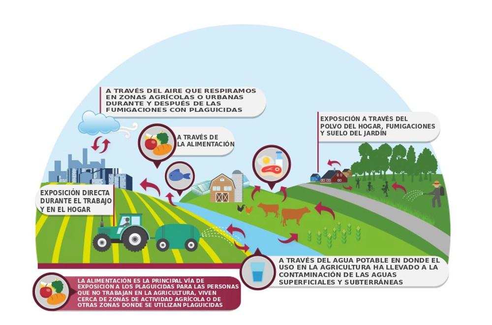 Esquema de como llegan los herbicidas a afectar en nuestro entorno - Imagen de greepeace.com