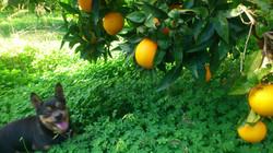 Naranjas ecológicas de valencia
