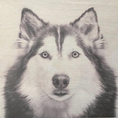 Custom Husky Print