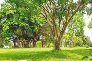 Manila Memorial Park Gazeebo