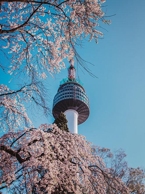 N-Seoul Tower Blossom