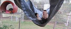 Fun in the hammock