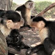A monkey meeting