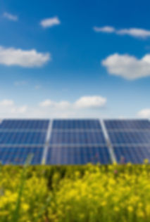 Photovoltaic modules and yellow flowers .jpg
