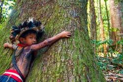 images AMAZONIE