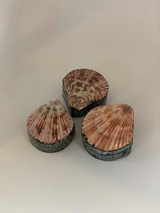 Seashell box Bundle