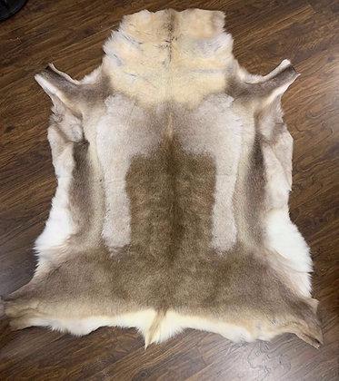 Reindeer Hide- 017