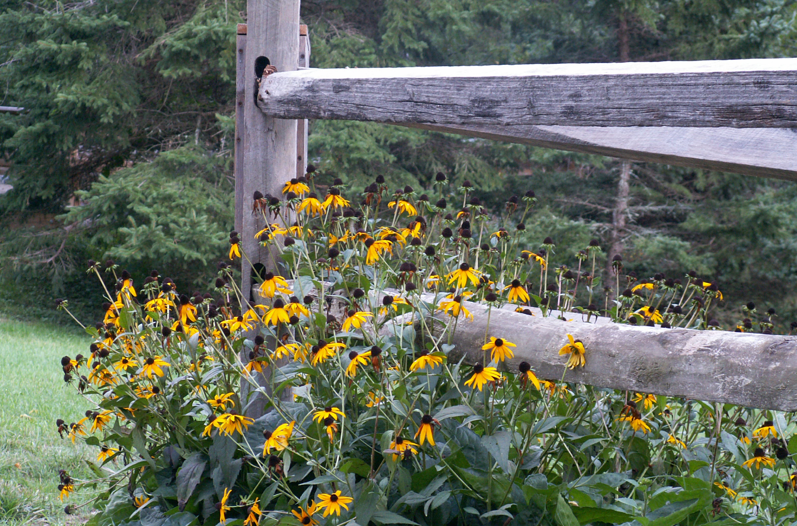Fence_Flowers.jpg