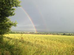 cornfield rainbow.jpg