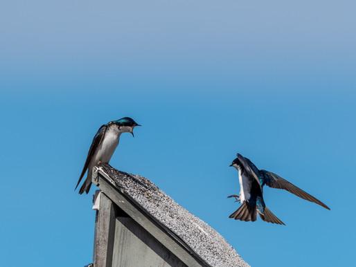 Een zwaluw maakt nog geen zomer.