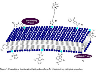Recent developments in the generation and application of lipid probes
