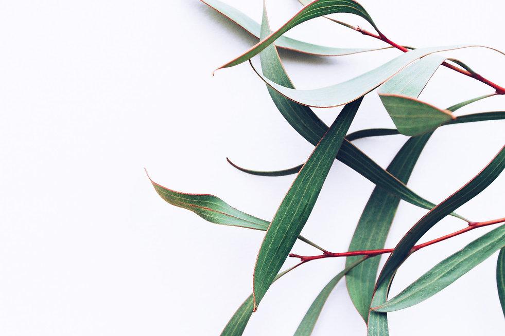 1Tax - Nature 3.jpg