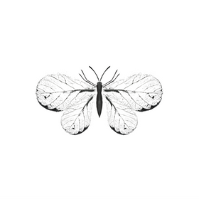 Leaf butterfly.png