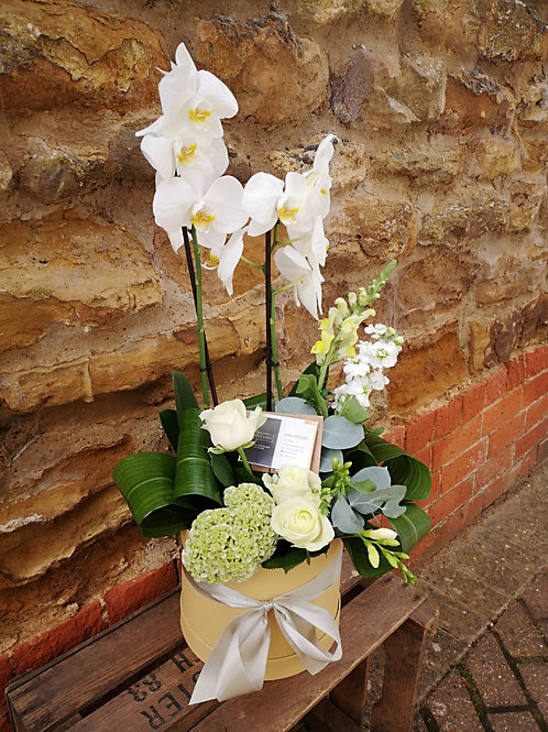 Mother's Day Planted Hat Box (LOCAL DELIVERY ONLY)