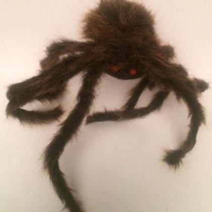 Big Hairy Spider Rental