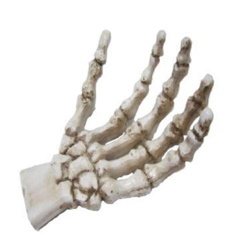 Skeleton Hand Rental