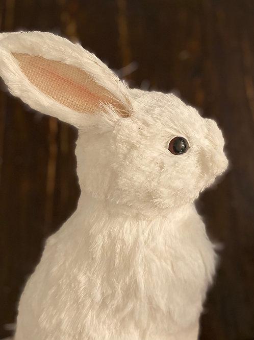 Arctic Rabbit Rental