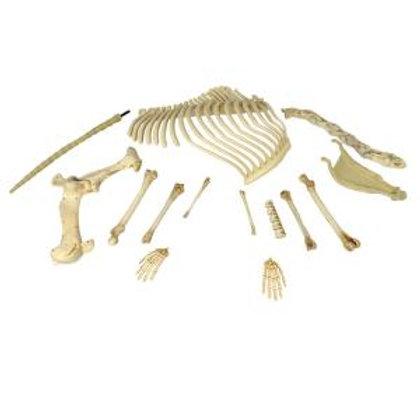 Dinosaur – Big Bag of Bones Rental