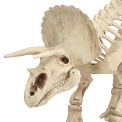 Dinosaur -Triceratops Rental