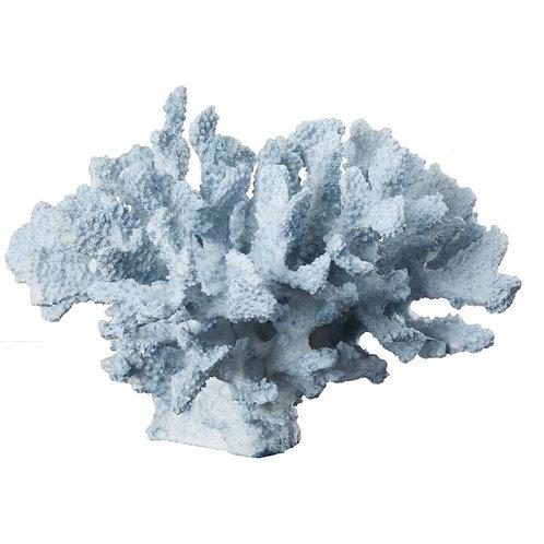 Coral Baby Blue - Rental