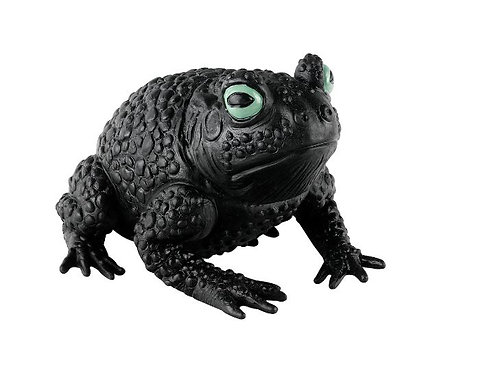 Black Toad Rental
