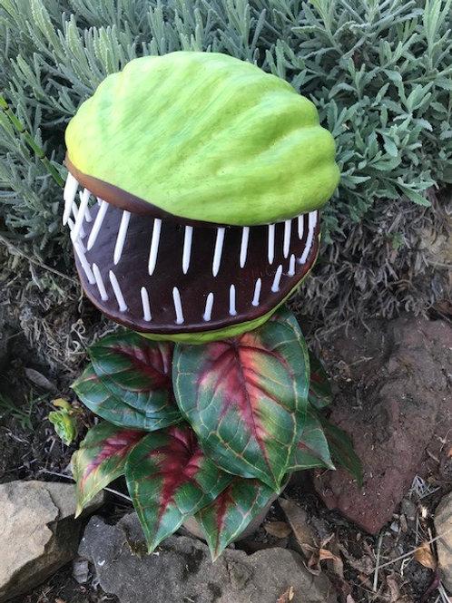Carnivorous Plant Rental