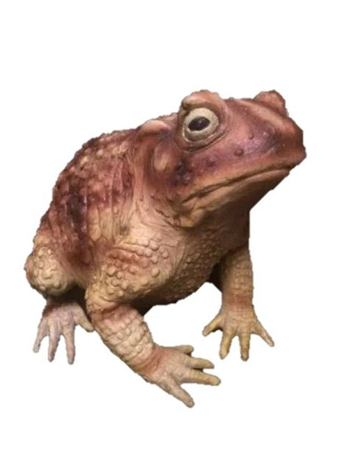 Giant Toad Rental