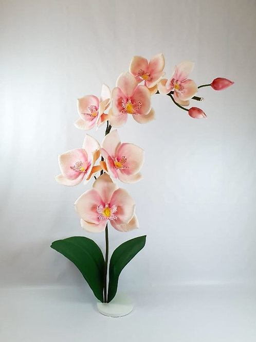 Giant Orchid Rental